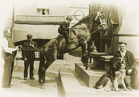 Horse at the clock tower, c. 1896